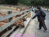 2009/1/27初二我在通霄天氣晴~飛牛牧場:DSCF2255 拷貝.jpg