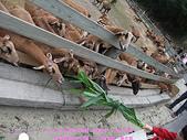 2009/1/27初二我在通霄天氣晴~飛牛牧場:DSCF2260 拷貝.jpg