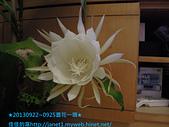 2013/9/22~9/25★花開花謝曇花一現★: