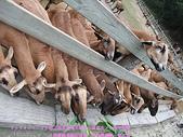 2009/1/27初二我在通霄天氣晴~飛牛牧場:DSCF2261 拷貝.jpg