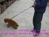2008/2/1-2/3流浪之旅高雄&佳里:狗