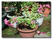 屋頂花園:02_DSCN8826.jpg