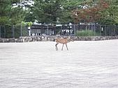 20090820 廣島行:P8210051.JPG