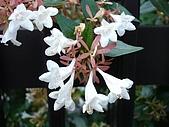 20080715-0724 Seventh Ave.:路邊看到的小花