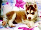 可愛ㄉ小狗狗!:7fa8dfbb0141b080.jpg