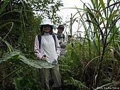 磺溪頭山:IMGP3757.jpg