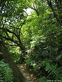 富士古道:IMGP3892.jpg