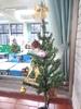20131209【301小蘿蔔】聖誕氣氛 感謝翔碩媽媽提供小聖誕樹*^^*