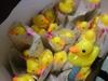 20131224【301小蘿蔔】聖誕小鴨.jpg