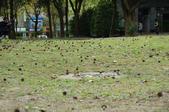 2013/02 大安森林公園:1772031772.jpg