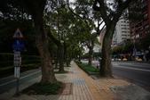 2013/02 大安森林公園:1772031757.jpg