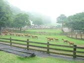 擺塘村體育會到飛牛牧場玩:P1010941.JPG