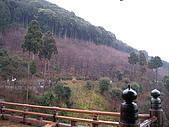 2010 0131-0207 京都:照片 023