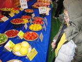 金勇番茄農場:IMG_3346.JPG