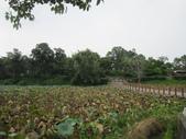 台南- 坐大王蓮:IMG_2743.JPG