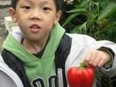 金勇番茄農場:IMG_3382.JPG