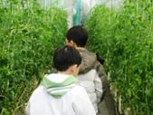金勇番茄農場:IMG_3383.JPG