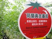 金勇番茄農場:IMG_3357.JPG