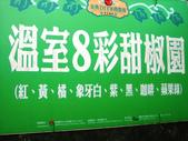 金勇番茄農場:IMG_3364.JPG