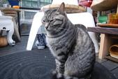 20140106李東東生日_屋頂上的貓:DSC_7543.JPG