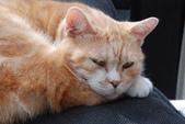 20140106李東東生日_屋頂上的貓:DSC_7544.JPG