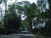 屏東縣一日遊(20080120):DSC00389 綠色隧道.jpg