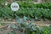 201702赤腳ㄚ生態農莊:DSC_0840.JPG
