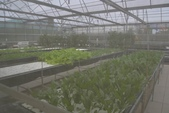 201702赤腳ㄚ生態農莊:DSC_0996.JPG