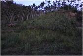 10/05/09-台南梅嶺賞螢趣。:1094740213.jpg
