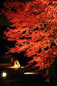 2009_京都紅葉狩Part I (11.25-11.26):IMG_1383.JPG