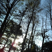 Tree:16388461_1816439331953721_584744120_o.jpg