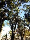 Tree:16409420_1816439531953701_188045552_o.jpg