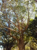 Tree:16389347_1816439598620361_75423561_o.jpg