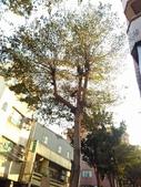 Tree:16409053_1816439495287038_1290569288_o.jpg