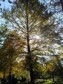 Tree:16388980_1816439551953699_1110113746_o.jpg