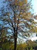 Tree:16388495_1816439618620359_1517957631_o.jpg