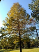 Tree:16443706_1816439568620364_1773248499_o.jpg