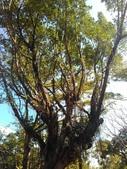 Tree:16409199_1816439608620360_268408835_o.jpg
