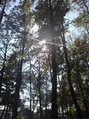 Tree:16409682_1816439445287043_410094736_o.jpg