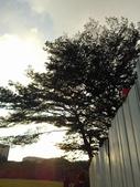 Tree:16442717_1816439461953708_1917655943_o.jpg