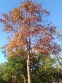 Tree:16409526_1816439905286997_865766500_o.jpg