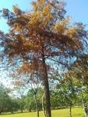 Tree:16409592_1816439895286998_750154039_o.jpg