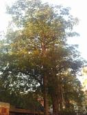 Tree:16409912_1816439475287040_732862360_o.jpg