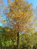 Tree:16442988_1816439691953685_1821326917_o.jpg