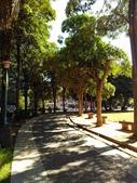Tree:16443100_1816439415287046_250451472_o.jpg