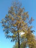 Tree:16443856_1816439665287021_1813019966_o.jpg