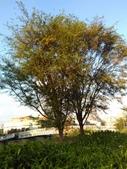 Tree:16389342_1816439448620376_1301739836_o.jpg