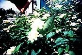 維維塔的樂摸生活:001-004.jpg