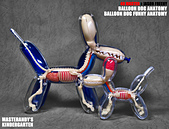 4D MASTER BALLOON DOG ANATOMY:01.jpg