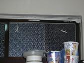 這裡是雜圖區:家裡的壁虎